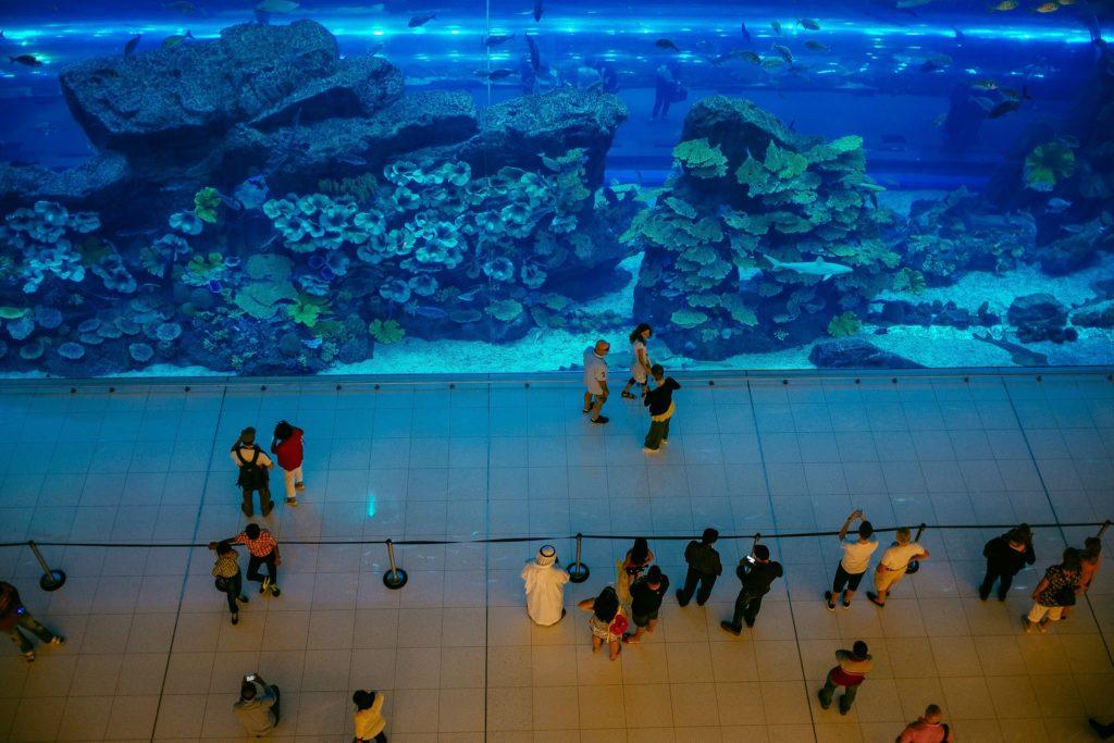 Аквариум в Дубае фото и отзыв