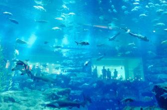 Дубайский аквариум: отзывы, фото, цена билетов, как добраться
