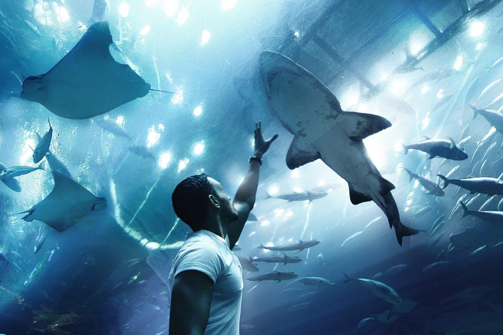 Тунель в аквариуме Дубая